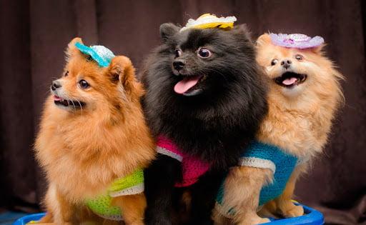 Шоу дрессированных собачек